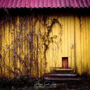 Vieille grange en bois jaune