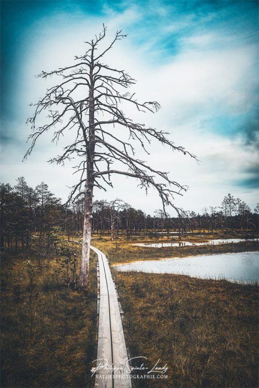 Ponton dans le parc de Laheema en Estonie