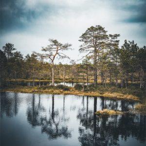 Les arbres du parc de Laheema en Estonie