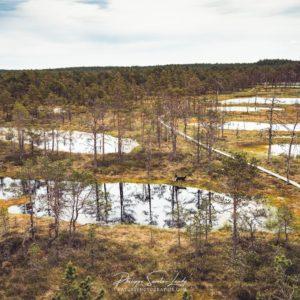 Panorama sur les marais de Laheema en Estonie