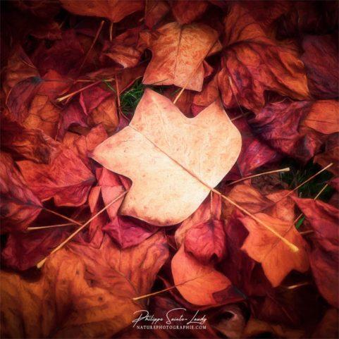 Paintographie sur des feuilles en automne