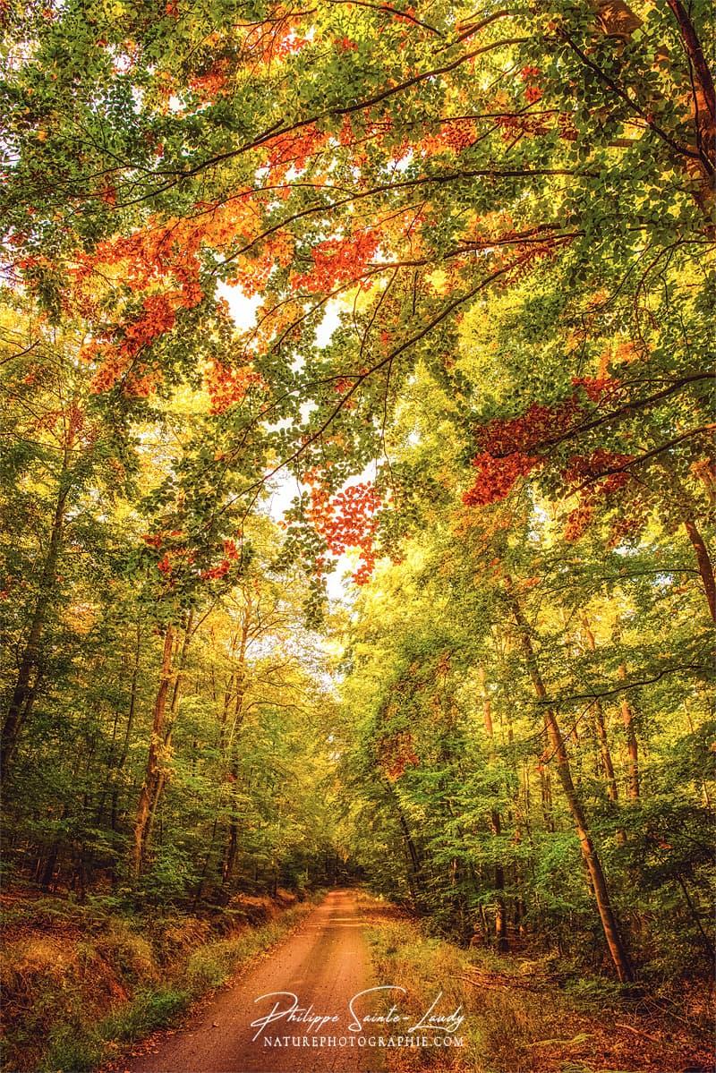 Chemin coloré dans une forêt en automne