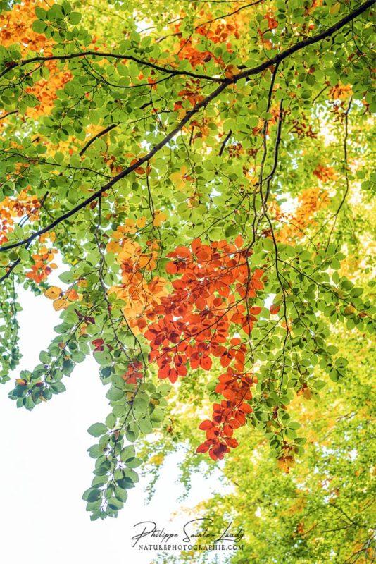 Feuilles de couleurs en automne
