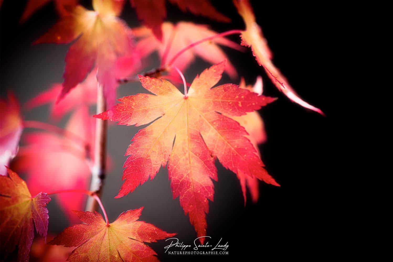 foto de Les premiers détails de l'automne en photos…