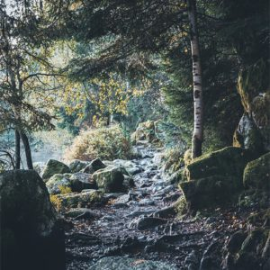 Sentier de montagne en Suisse