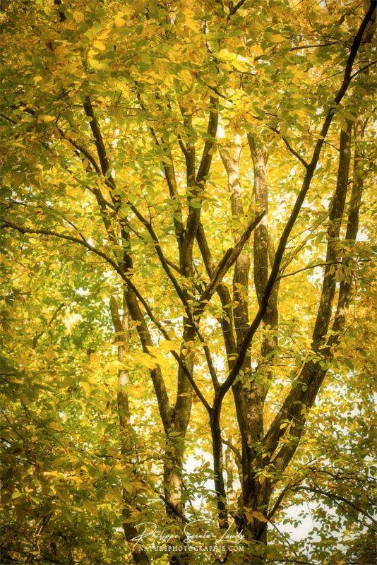 Un arbre jaune en automne