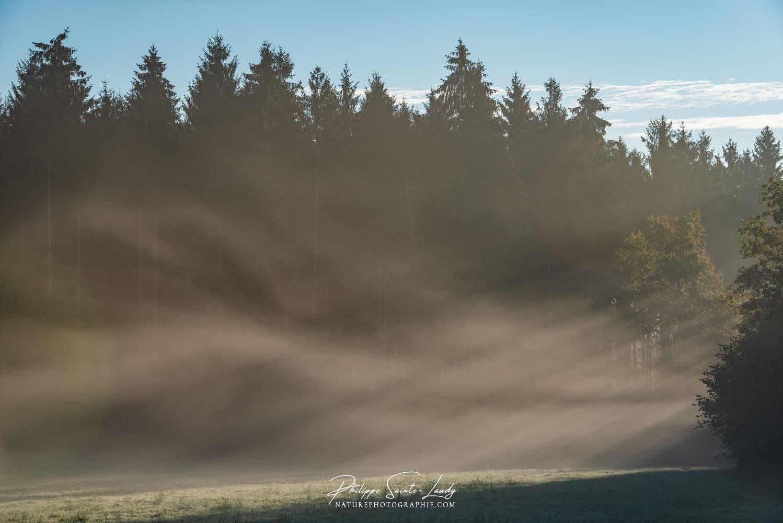 Brume matinale sur un champs