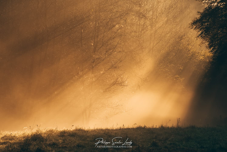 Rayons de lumière en lisière de forêt