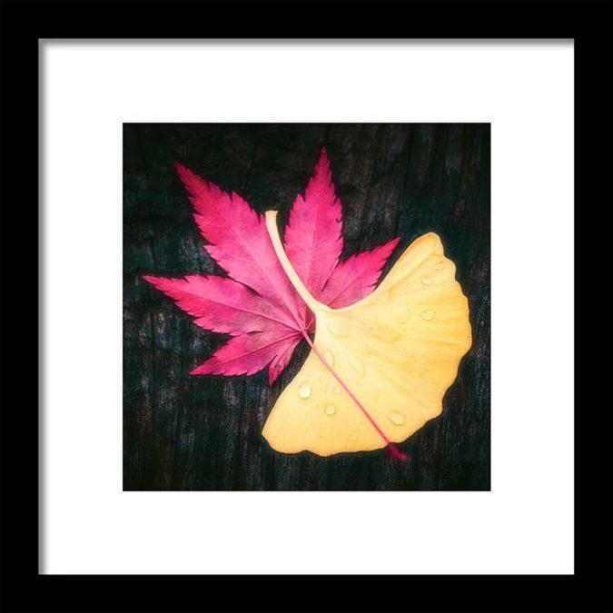 Tableau d'automne avec feuilles de ginkgo et érable