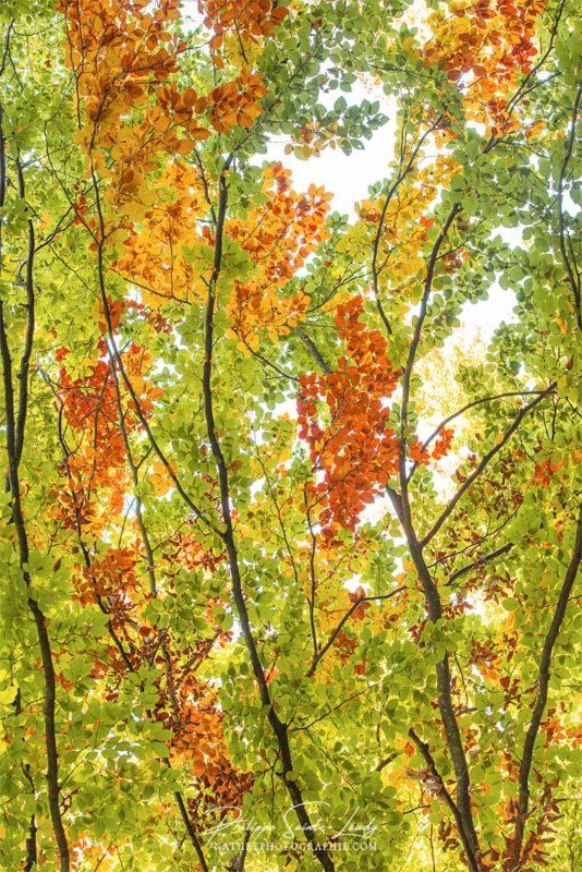 Branches avec des feuilles en automne