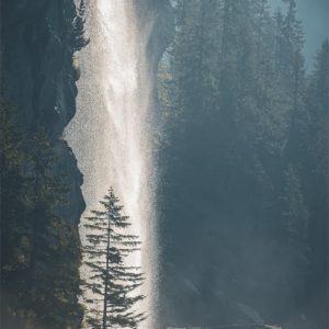Un sapin dans la lumière d'une cascade