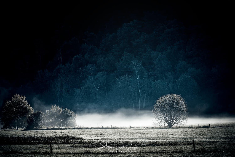 Brume au-dessus d'un champs
