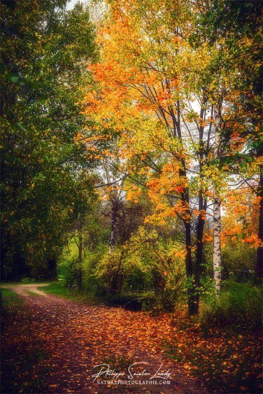 Belles couleurs d'automne en forêt