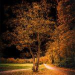 Arbre en automne devant un ciel noir