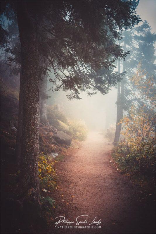 Brouillard sur les sentiers autour du lac Mummel en Allemagne