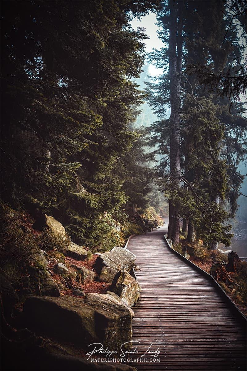 Sentiers du lac Mummel en Allemagne