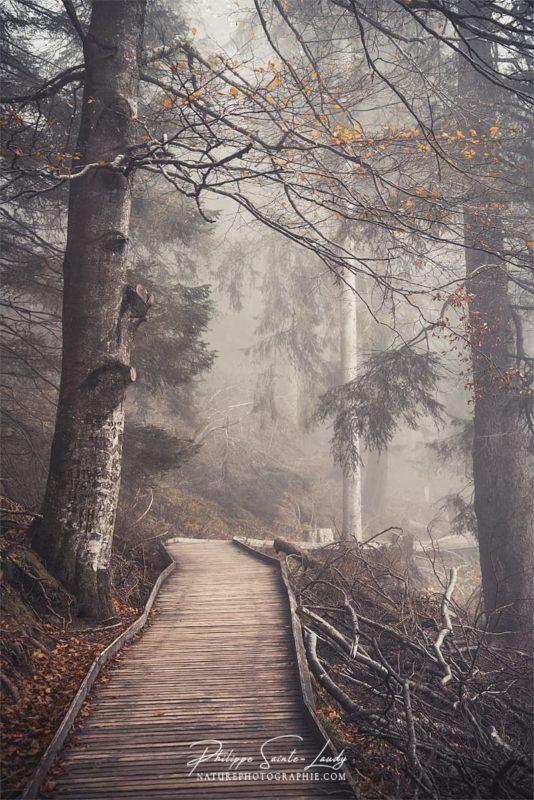 Ambiance d'automne sur les sentiers en forêt