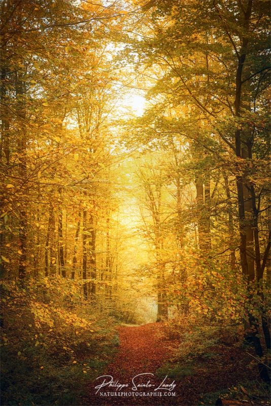 Lumière dans une forêt en automne