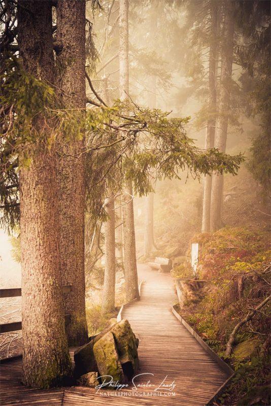 Photo de brouillard sur des sentiers en forêt