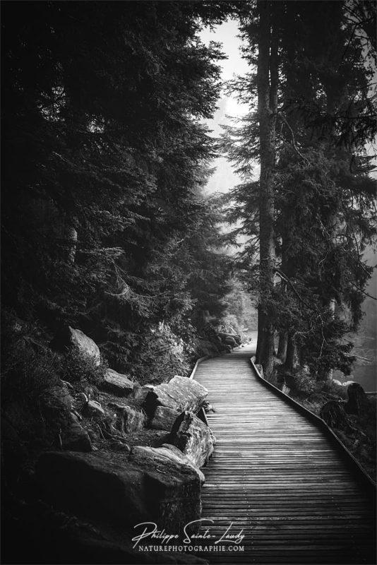 Forêt en noir et blanc sur les sentiers du Mummelsee