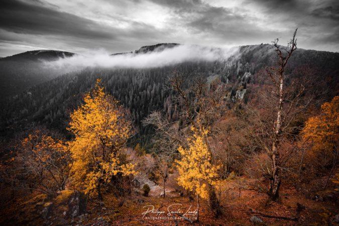 Brouillard dans les Vosges
