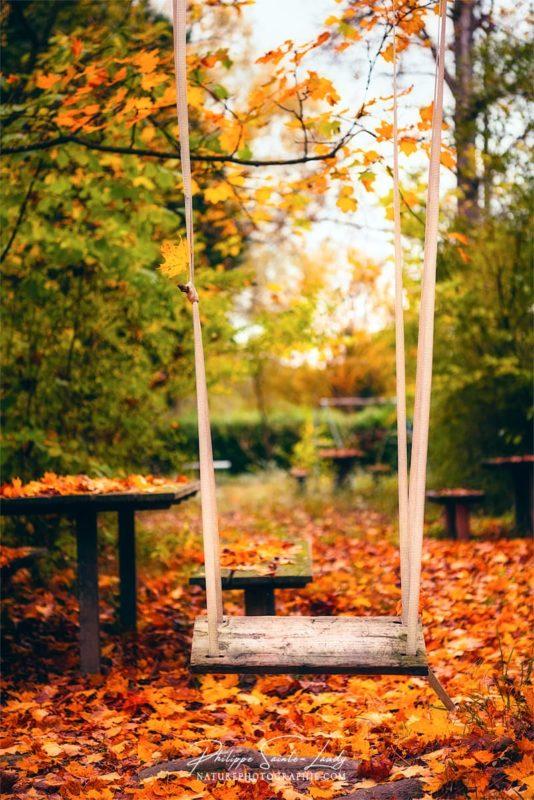 Une balançoire dans une forêt en automne