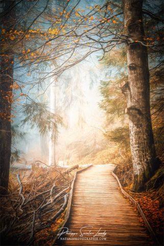 Paintographie d'un chemin dans une forêt en automne