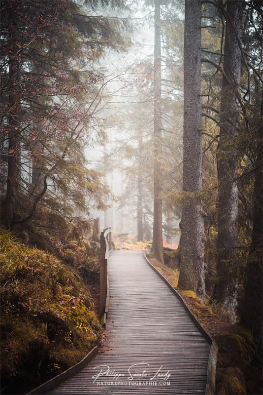 Promenade sur les sentiers autour du Mummelsee