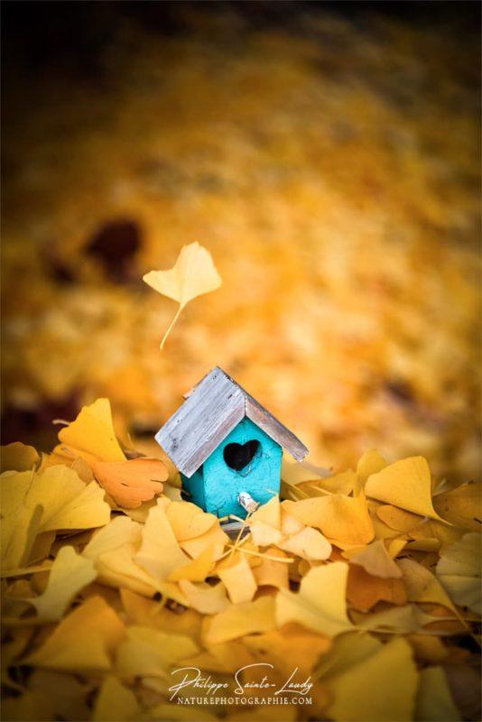 Une petite maison en bois au milieu de feuilles de ginkgo