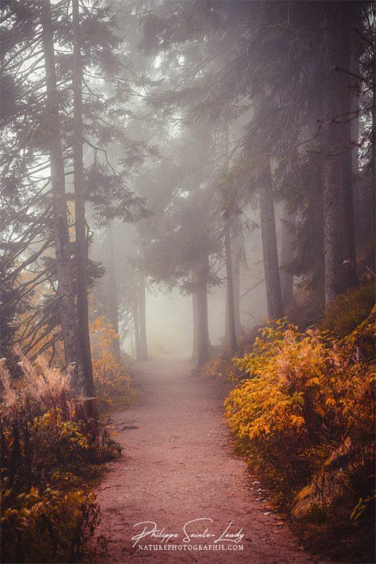 Ambiance brumeuse dans une forêt en automne