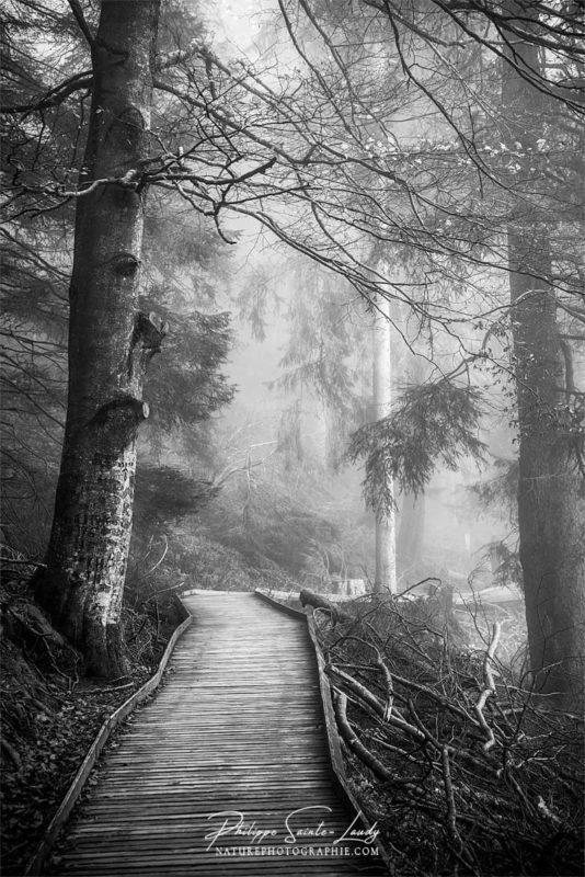 Sur les sentiers du Mummelsee en Forêt Noire