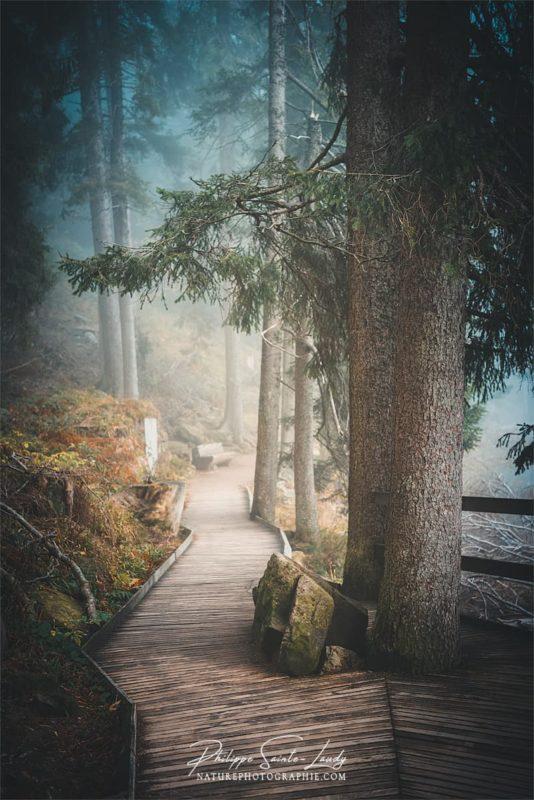 Sentiers dans le brouillard autour du lac Mummel