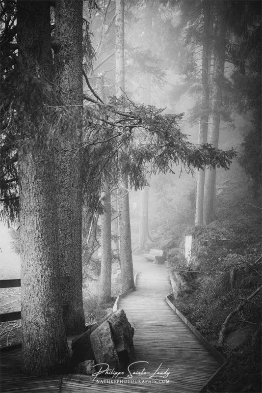 Photo N&B du sentier autour du Mummelsee - Allemagne