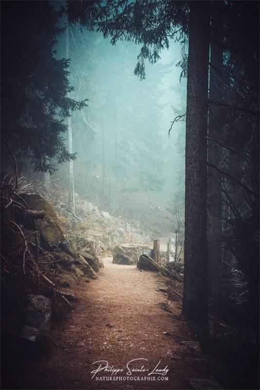 Sentiers dans la brume autour du Mummelsee - Forêt Noire