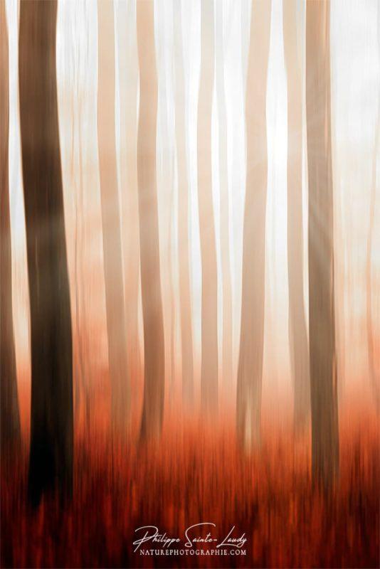 Flou directionnel d'arbres dans une forêt