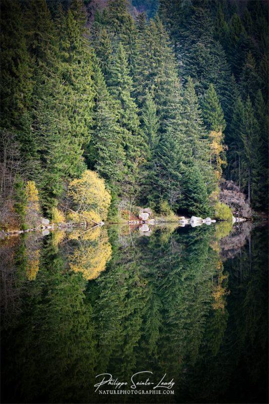Reflet d'une forêt de sapins dans le Lac Vert