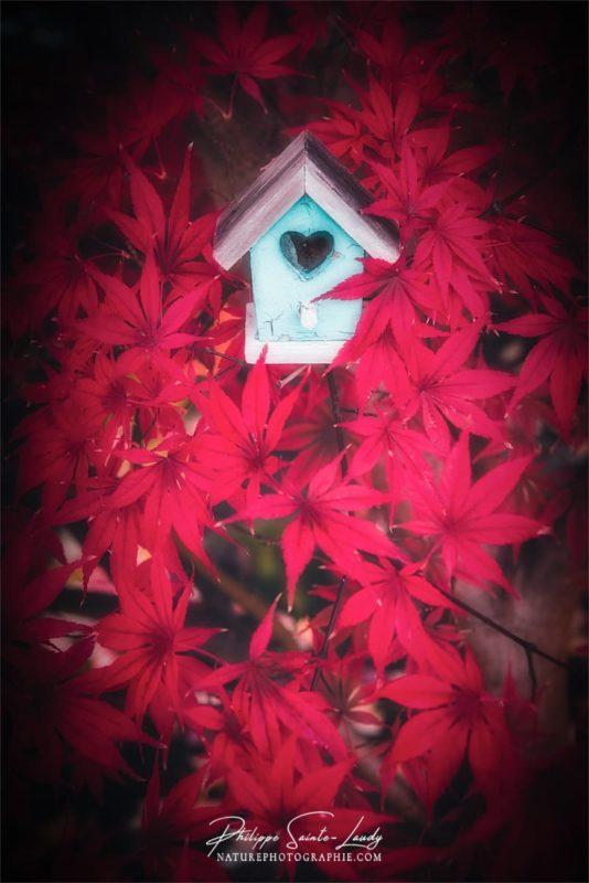 Une mangeoire à oiseaux dans un érable rouge