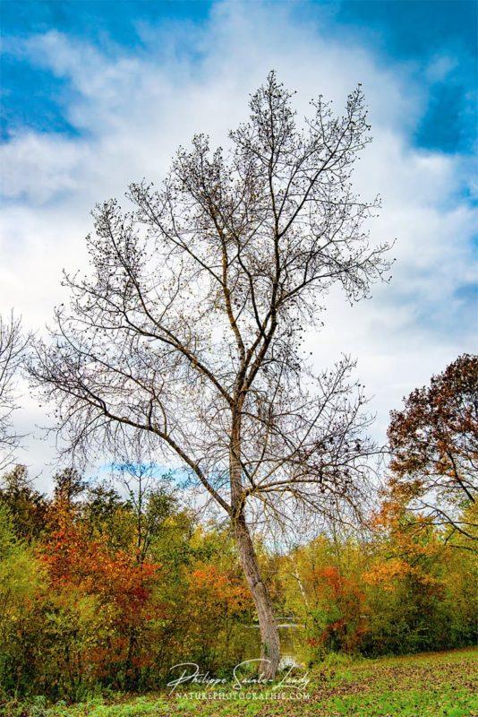 Un arbre courbé en automne