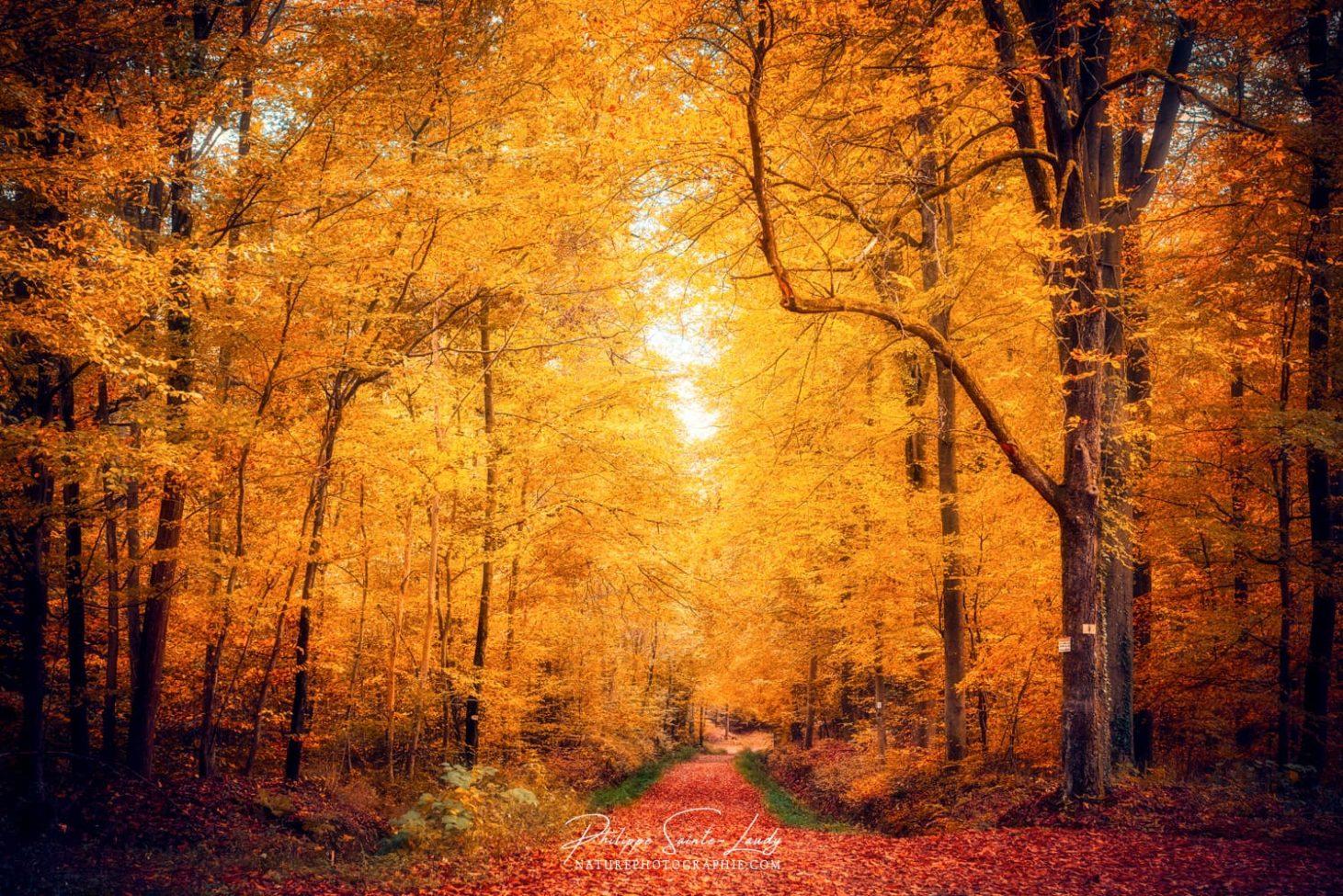 Un chemin traverse une forêt en automne