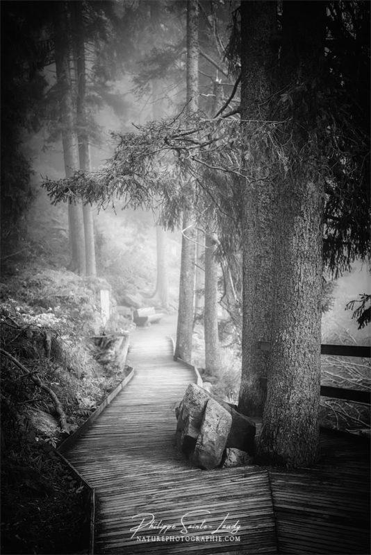 Noir et blanc sur les chemins forestiers en Allemagne