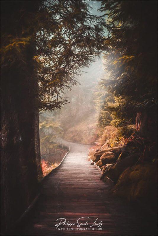 Sentiers en forêt par un jour de brouillard