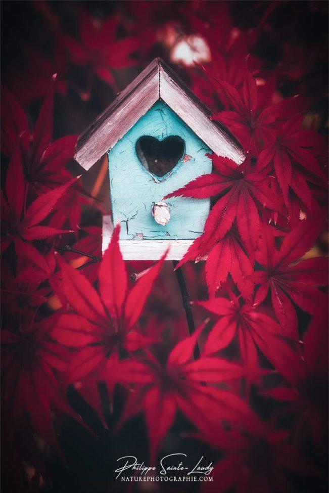 Une cabane à oiseaux au milieu de feuilles d'érable rouge