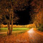 Route en bordure de forêt