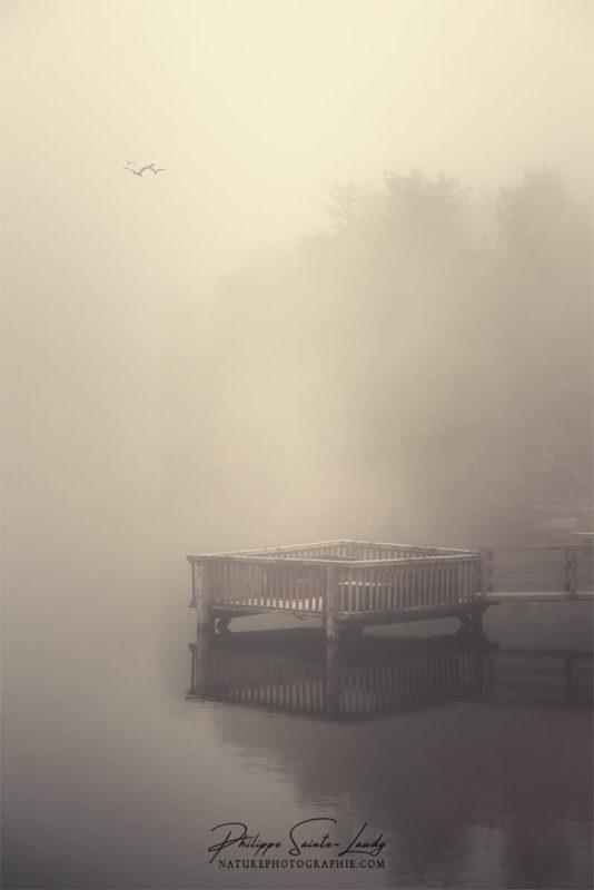 Photo poétique dans le brouillard du Mummelsee