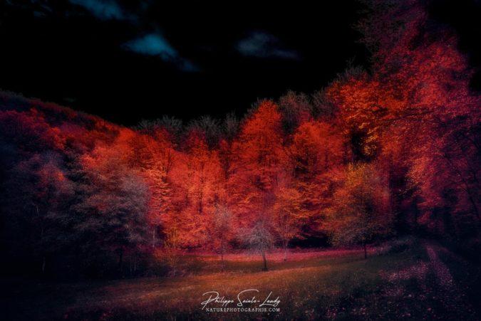 Forêt rouge et ciel noir