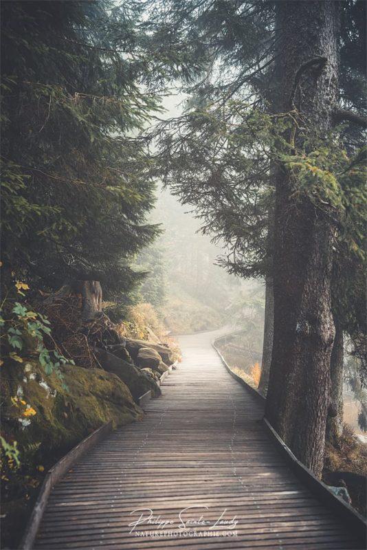 Brouillard sur les sentiers au Mummelsee en Allemagne