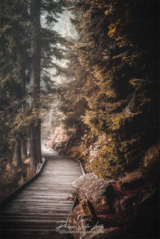 Chemins autour du lac Mummel en Allemagne