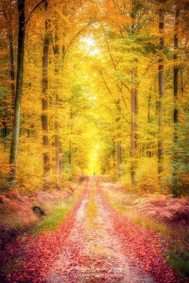 Sentier dans une forêt en automne
