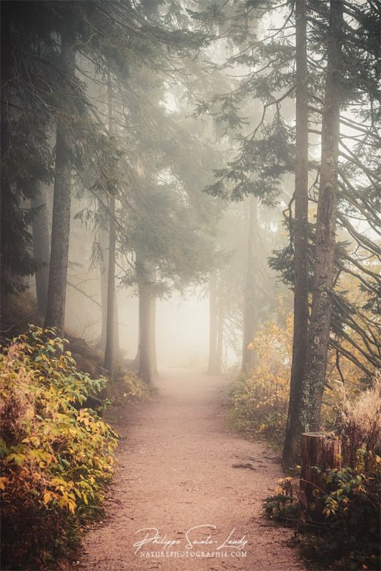 Forêt en automne et dans la brume