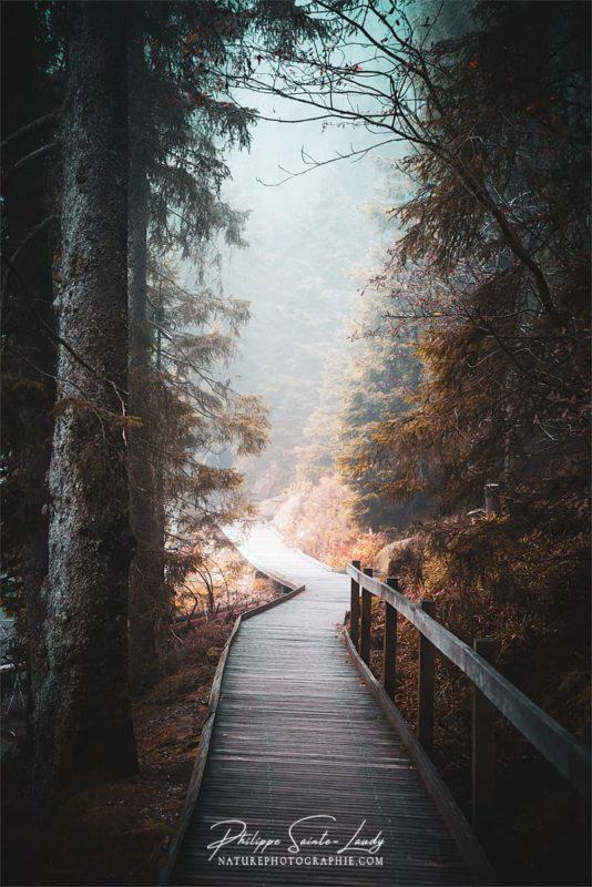 Chemin et sentiers en forêt